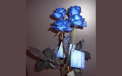 verpakken op maat rozen