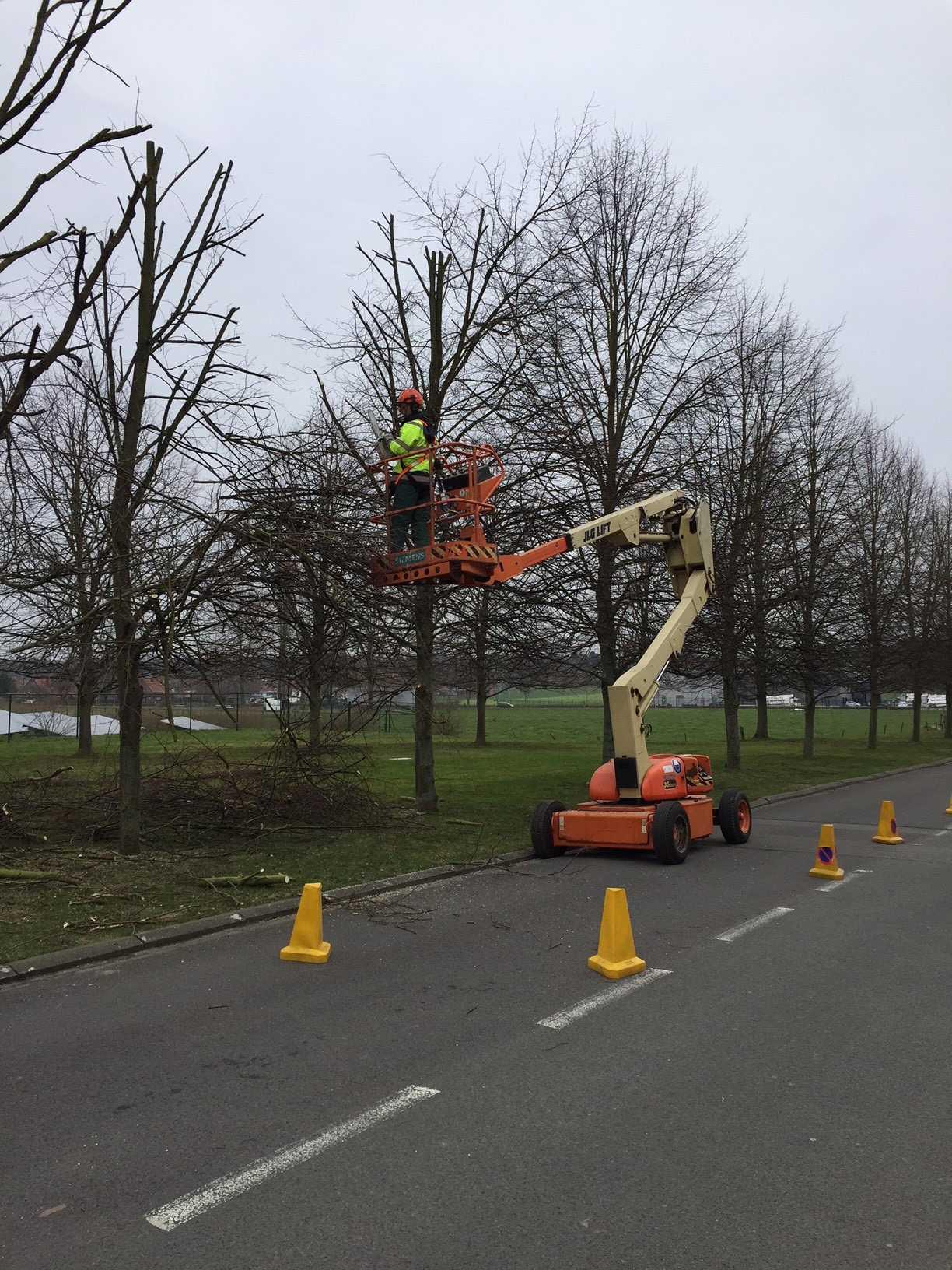 Wintersnoei bomen: activiteit van maatwerkbedrijf (beschutte werkplaats) AMAB